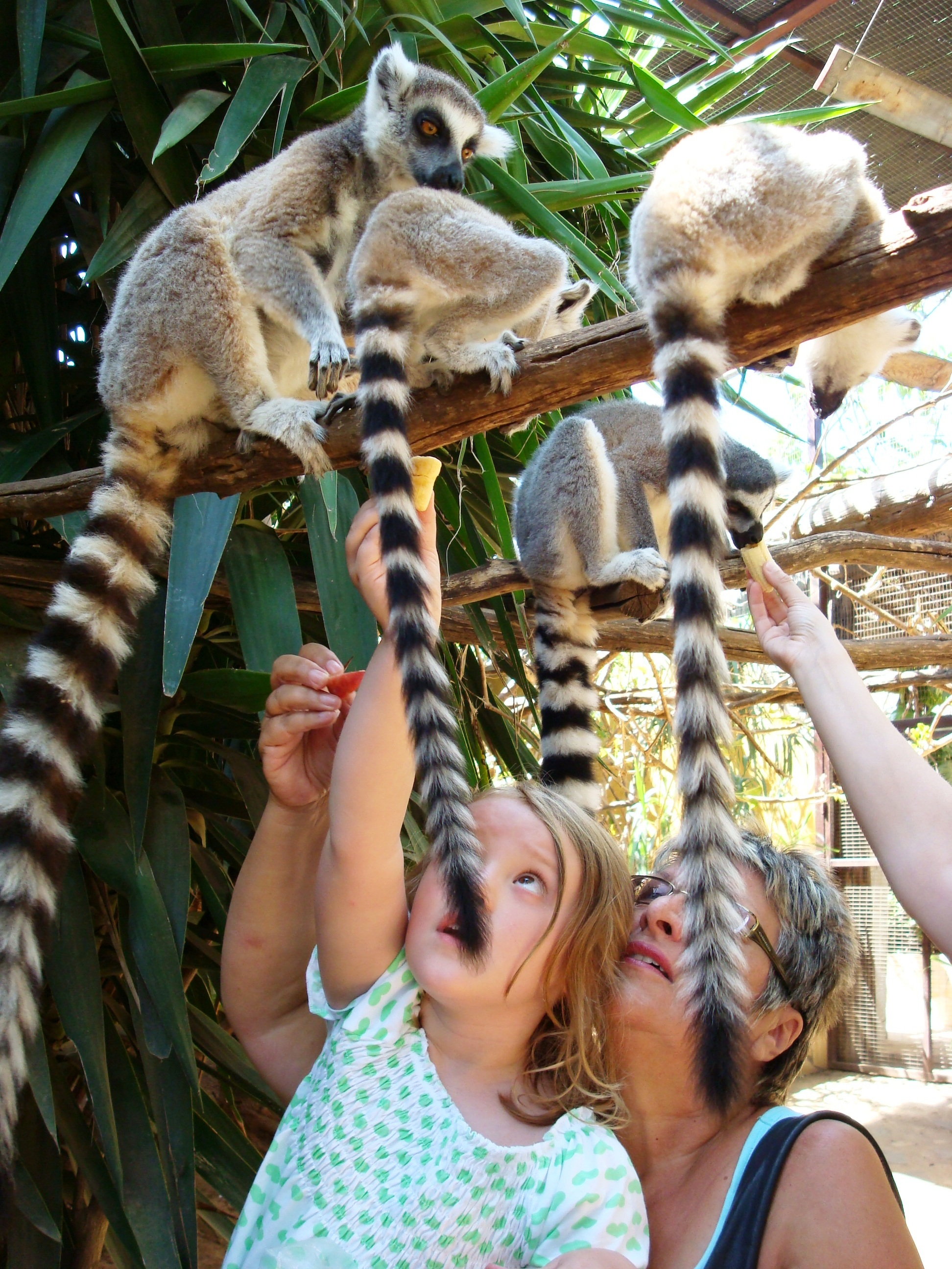 Monkey Park Zoo – Los Cristianos – Tenerife  Tenerife Blogs : Its all a...