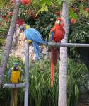 Things to do in Tenerife, Monkey Park Zoo, Los Cristianos