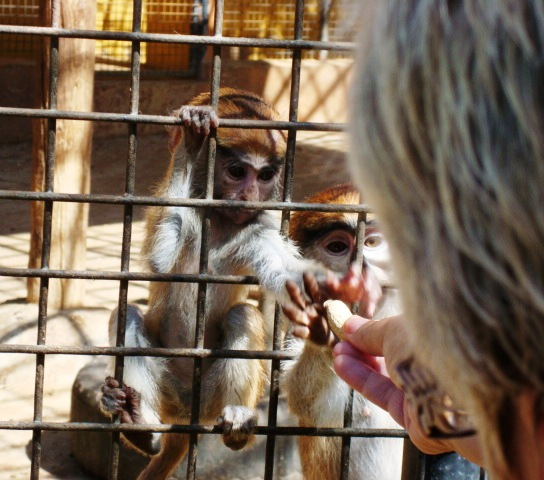 Things to do in Tenerife, Monkey Park Zoo, Los Cristianos  Red Queens Musings
