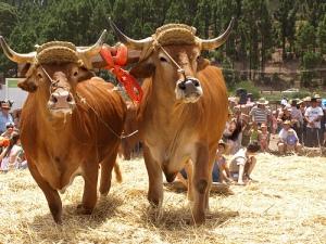 Carnaval 2012 in Santa Cruz, Puerto Cruz and Los Cristianos, Tenerife? 4848598203_c5a3308998