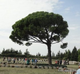Lone Pine (6)