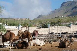 Camel Park (14)