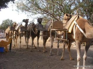 Camel Park (3)