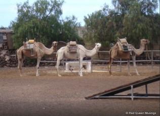 Camel Park (7)