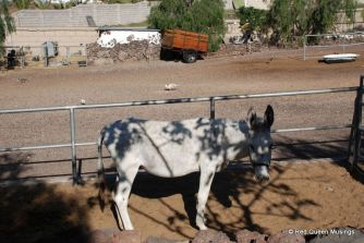 Camel Park Farm (4)