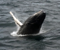 Whale Watching (4)