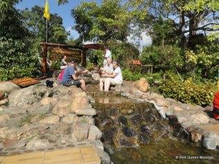hot-springs-2