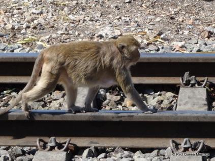 monkey-town-1