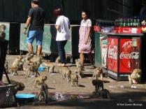 monkey-town-3
